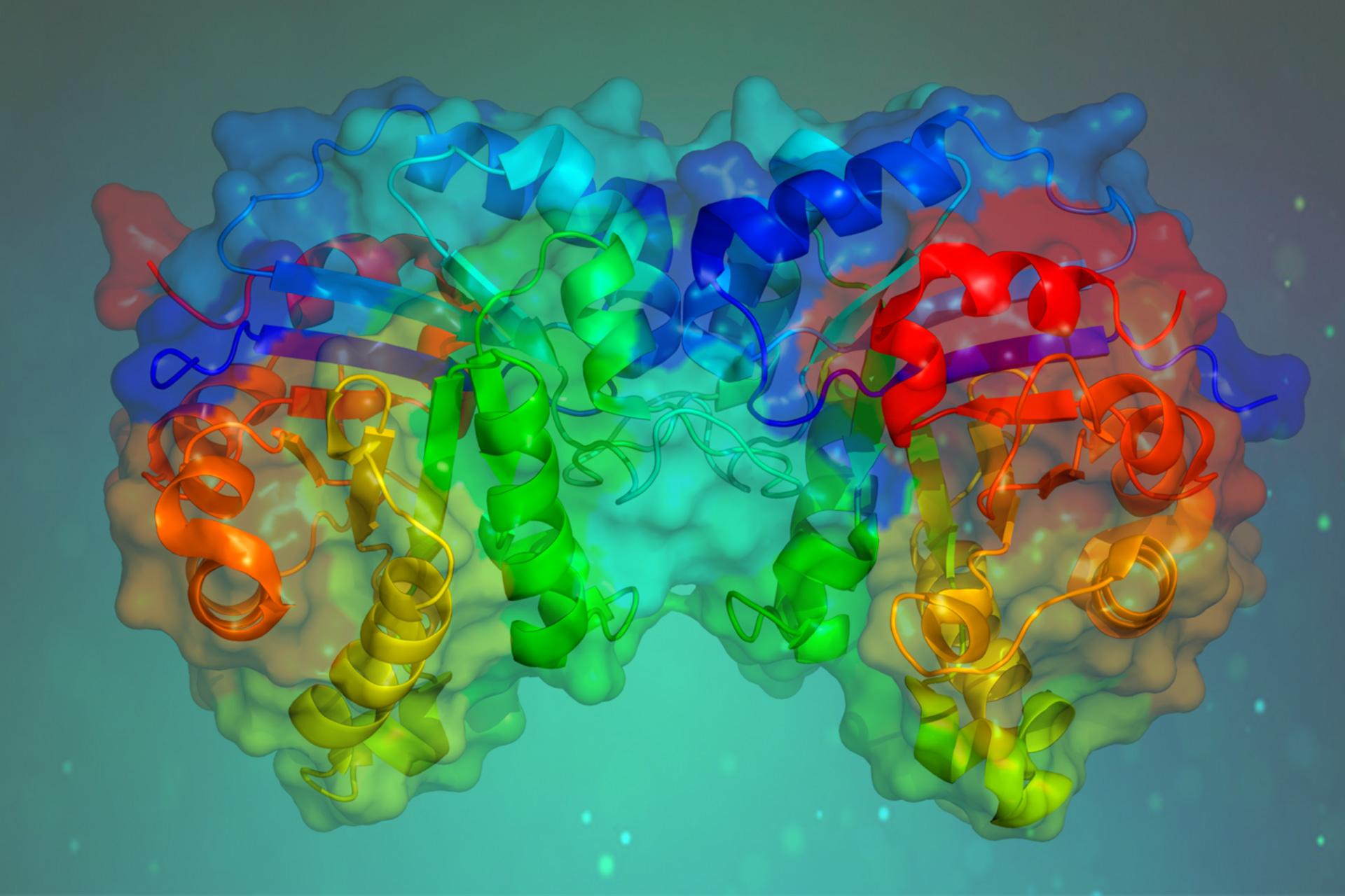 Activación en inhibición de enzimas digestivas